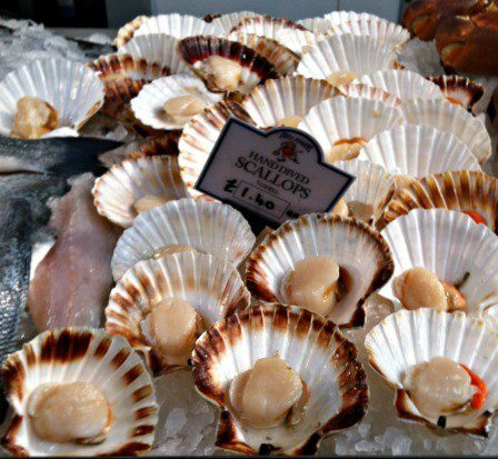 Scallops for sale