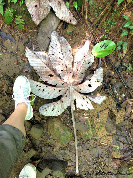 The plant life thrives in the moisture of the tropical rain forest!