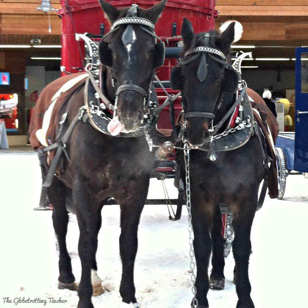 These guys add to the holiday cheer as they pull their red carriage through snow-covered Zermatt.