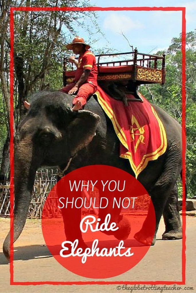 Why You Should Not Ride Elephants