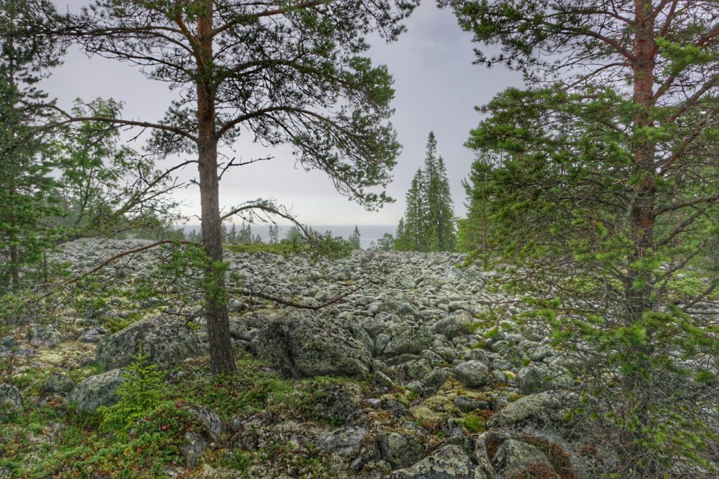 skelleftea in Swedish Lapland Nature Reserve