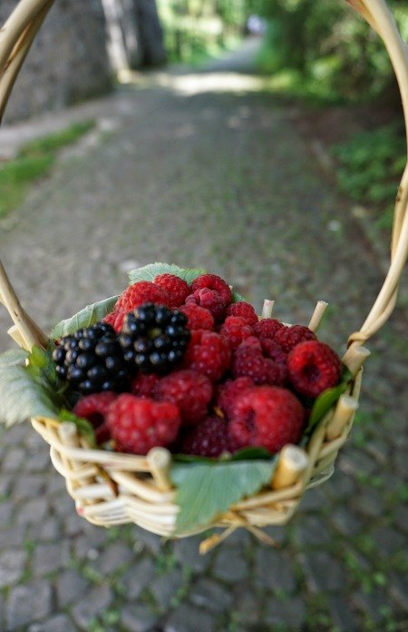 Sinaia Romania berry basket