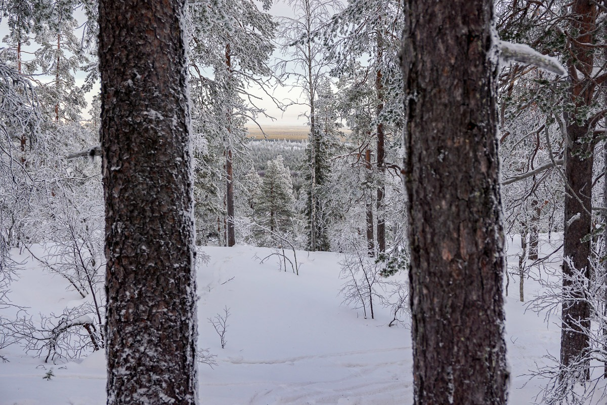 Snowshoeing in Luosto Finland