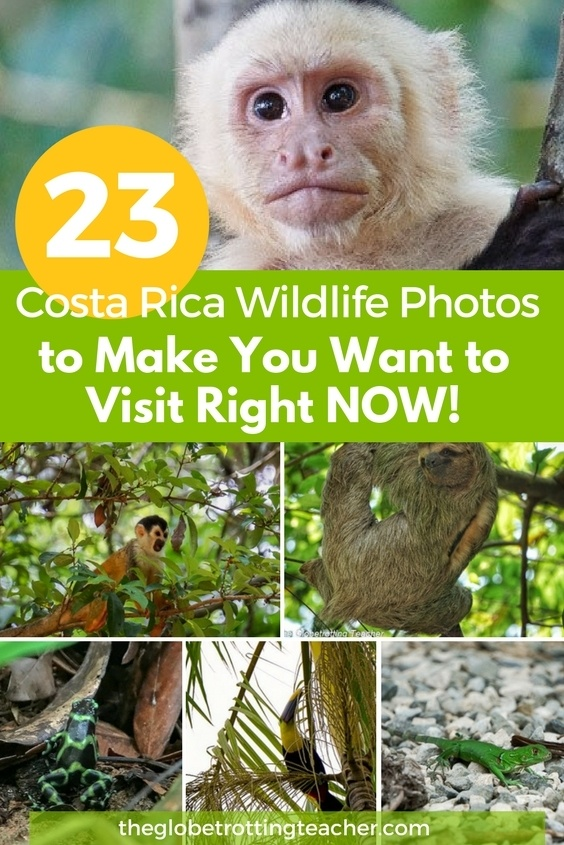 23 Costa Rica Wildlife Photos to Mkae You Want to Visit right now