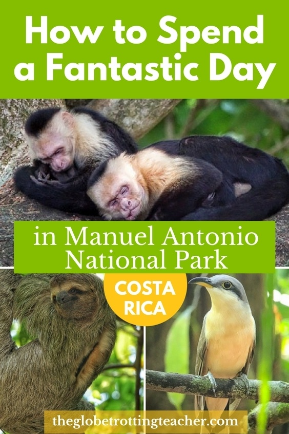 How to Spend a Fantastic Day in Manuel Antonio National Park - No visit to Costa Rica is complete without a stop on Manuel Antonio. See Costa Rican animals and enjoy gorgeous beaches in the National Park. #travel #costarica #Wildlife #manuelantonio #nationalparks #centralamerica