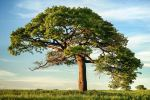 The 25 Best Family Tree Gifts for Travelers who Love Genealogy