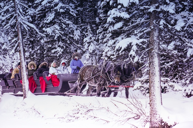 Banff National Park - Lake Louise Sleigh Ride