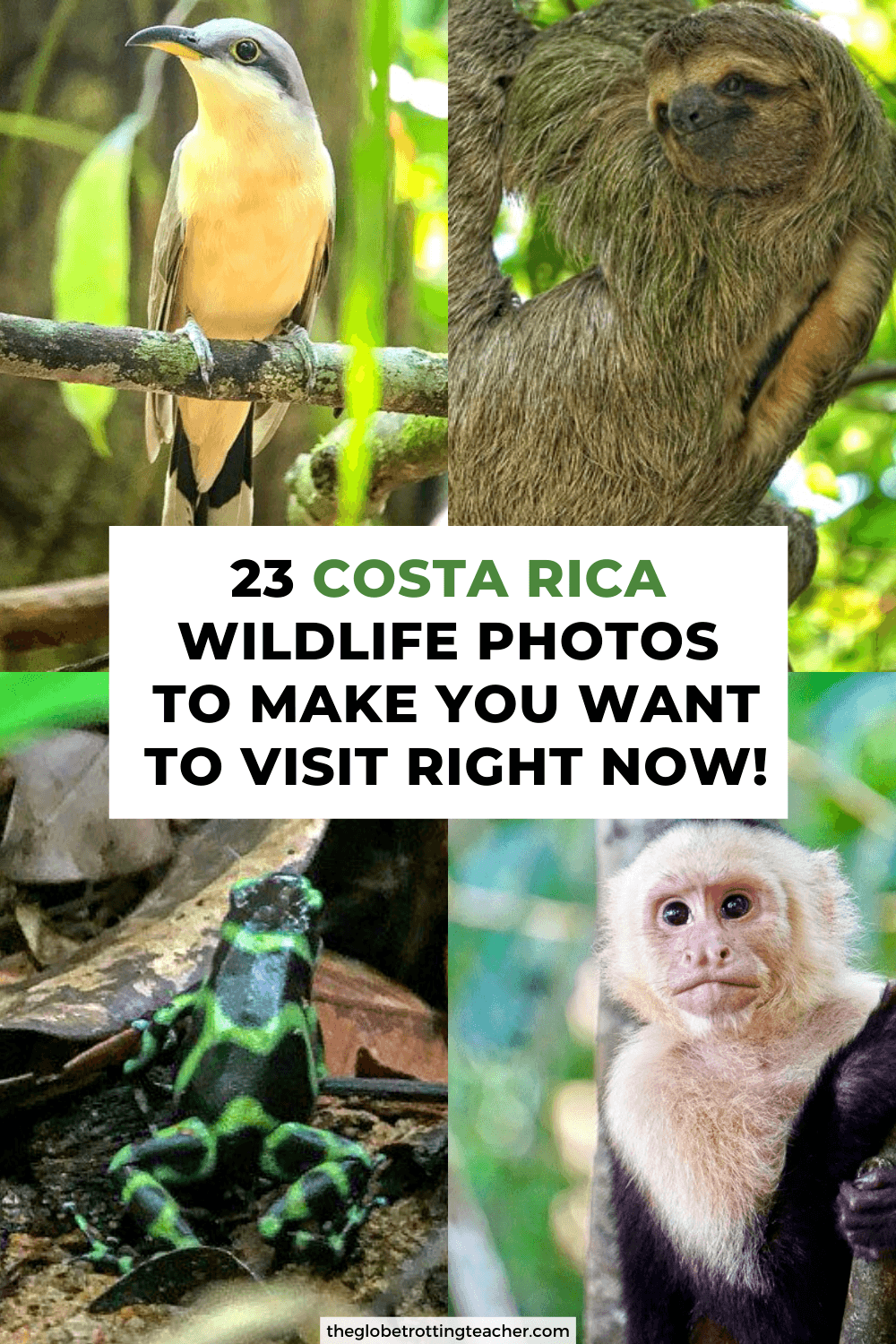23 Costa Rica Wildlife Photos to Make You Want to Visit Right Now!